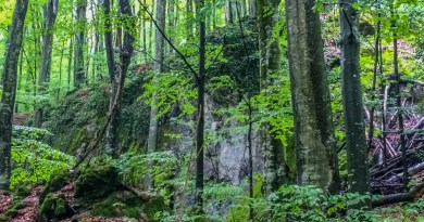 Uholka Wilderness Exchange Programme - 00042.jpg - © European Wilderness Society CC BY-NC-ND 4.0