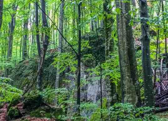 Uholka joins the European Wilderness Network – Audit started