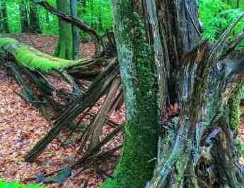 Uholka Sirokyy Luh Wilderness Exchange Programme