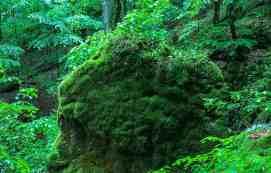 Uholka Wilderness Exchange Programme - 00098.jpg - © European Wilderness Society CC BY-NC-ND 4.0