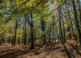 European Beech Forest Network – Today is the day!