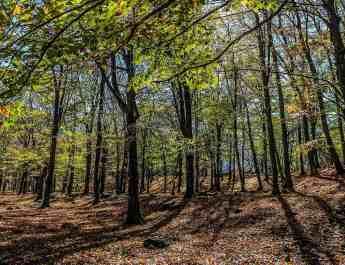 EWS - Central Balkan Wilderness -00466_