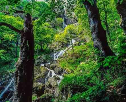 Central Balkan National Park--58