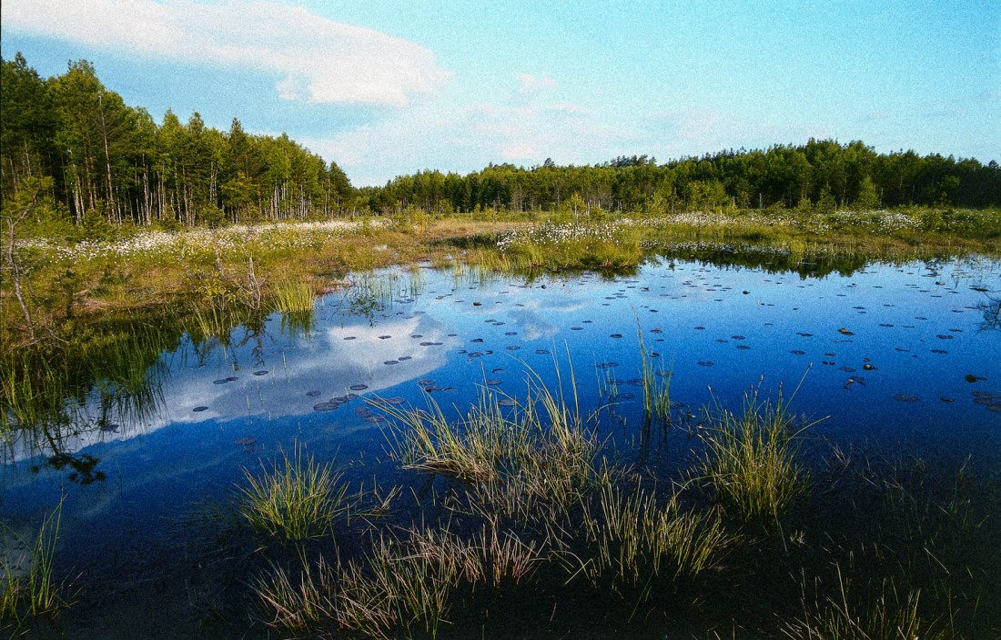 Cepkeliai-Dzukija National Park 0005.jpg - European Wilderness Society - CC NonCommercial-NoDerivates 4.0 International