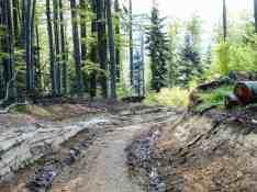 Deforestation Romania Hannes Knapp_1220080