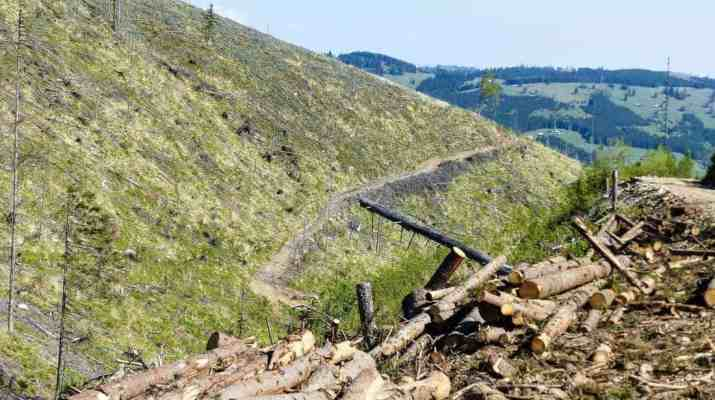 Should we stop illegal logging in Romania?