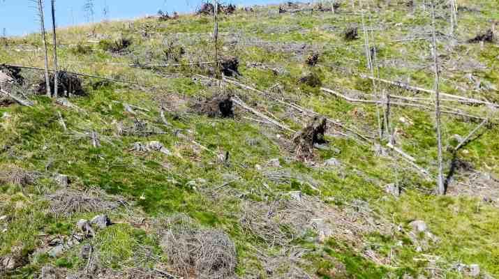 Deforestation Romania Hannes Knapp