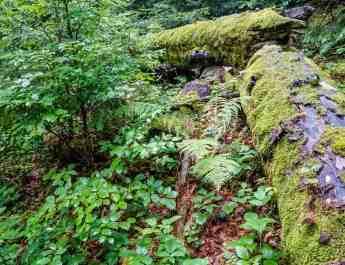 EWS - Gorgany Wilderness -08756_