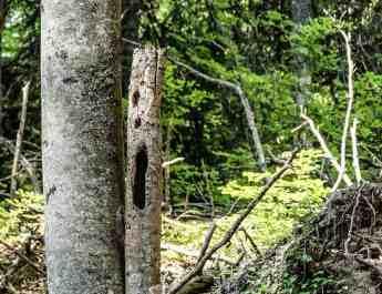 Kalkalpen Wilderness 242.jpg - European Wilderness Society - CC NonCommercial-NoDerivates 4.0 International