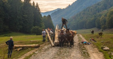 Romania, Work in the forest.jpg - © European Wilderness Society CC BY-NC-ND 4.0