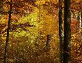 Slovakia 0162.jpg - European Wilderness Society - CC NonCommercial-NoDerivates 4.0 International