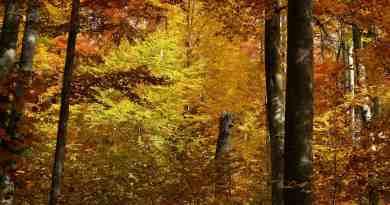 Slovakia 0162.jpg - © European Wilderness Society CC BY-NC-ND 4.0