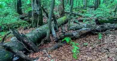 Zacharovanyy Kray WIlderness Exchange 0536.jpg - © European Wilderness Society CC BY-NC-ND 4.0