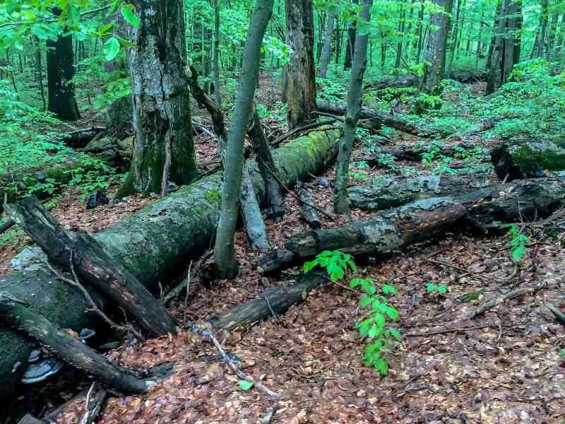 Zacharovanyy Kray Wilderness Exchange Programme - © All rights reserved