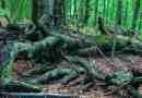 Zacharovanyy Kray WIlderness Exchange 0545.jpg - © European Wilderness Society CC BY-NC-ND 4.0