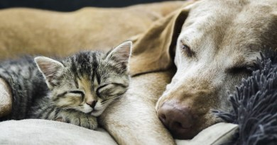cats-and-dogs.jpg - © European Wilderness Society CC BY-NC-ND 4.0