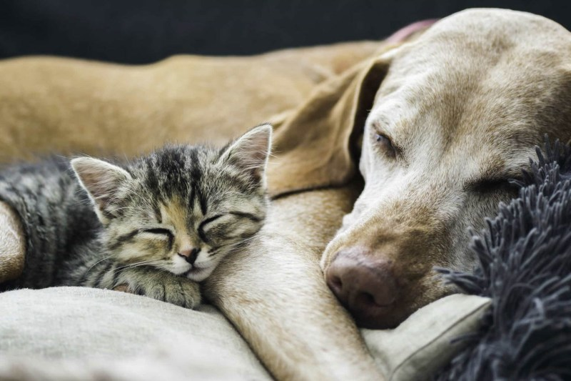 cats-and-dogs.jpg - European Wilderness Society - CC NonCommercial-NoDerivates 4.0 International