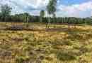 Koenigsbruecker Heide _ 122.jpg - © European Wilderness Society CC BY-NC-ND 4.0