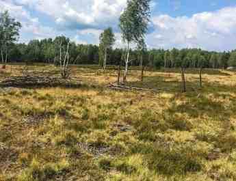 Königsbrücker Heide July 2017-122.jpg - © European Wilderness Society CC BY-NC-ND 4.0