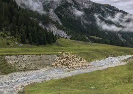 Successful herd management in Graubünden, Switzerland