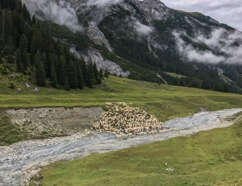 Sheep Herd Management 0158.jpg - © European Wilderness Society CC BY-NC-ND 4.0