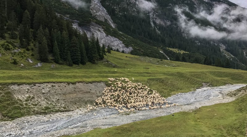 Sheep Herd Management 0158.jpg - © European Wilderness Society CC BY-NC-ND 4.0