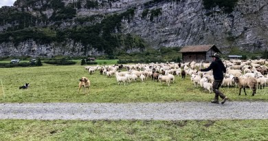 Sheep Herd Management 0175.jpg - © European Wilderness Society CC BY-NC-ND 4.0