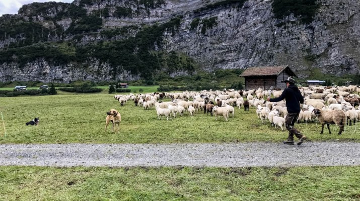 Sheep Herd Management 0175.jpg - © European Wilderness Society CC BY-NC-ND 4.0