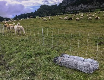 EWS - Sheep Herd Management -06875_