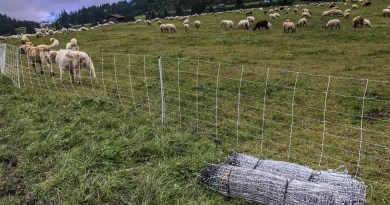 Sheep Herd Management 0191.jpg - © European Wilderness Society CC BY-NC-ND 4.0