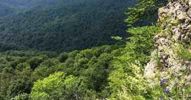 Uholka Wilderness Mala - 00196.jpg - © European Wilderness Society CC BY-NC-ND 4.0
