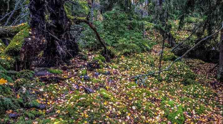EWS - Bothian Sea Wilderness, Finland -07672_