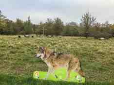 European Beech Forest Network Vilm 2017 0226
