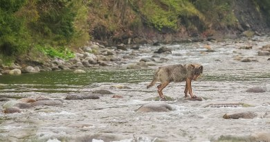 Bela WILDRIver ZivaRiekaErik Arola - 00041.jpg - © European Wilderness Society CC BY-NC-ND 4.0