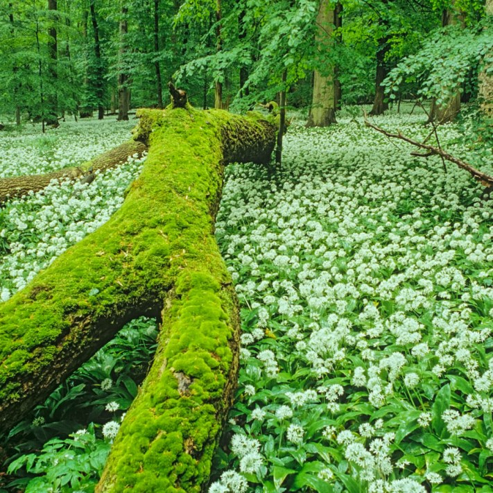 102_07_09_005.jpg - © European Wilderness Society CC BY-NC-ND 4.0
