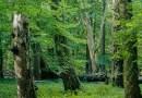 Excessive Nitrogen Levels Threaten Forests