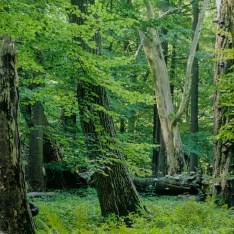 National Park Hainich Wilderness - 00003