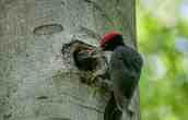 National Park Hainich Wilderness - 00005