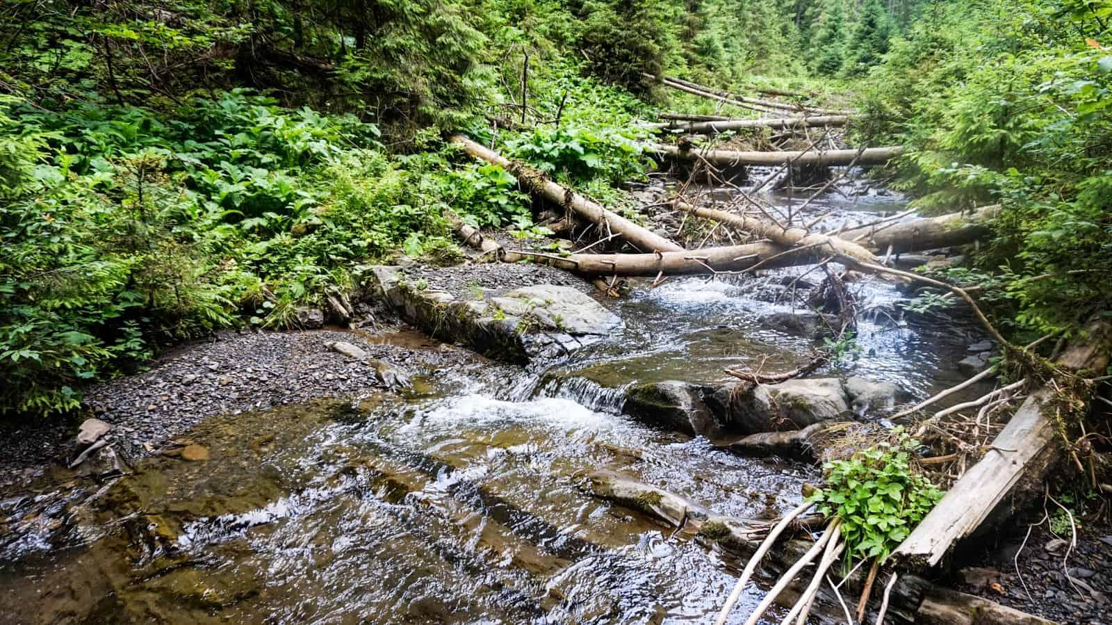 Synevyr National Park 0921.JPG - European Wilderness Society - CC NonCommercial-NoDerivates 4.0 International