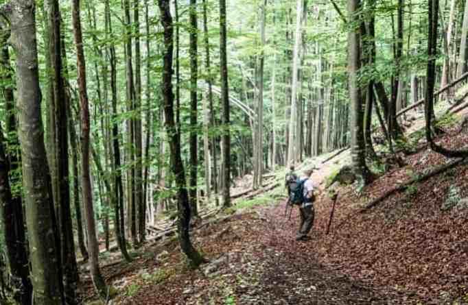 Kalkalpen Wilderness 126-2.jpg - © European Wilderness Society CC BY-NC-ND 4.0