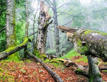 National Park Kalkalpen © NP KA - © All rights reserved