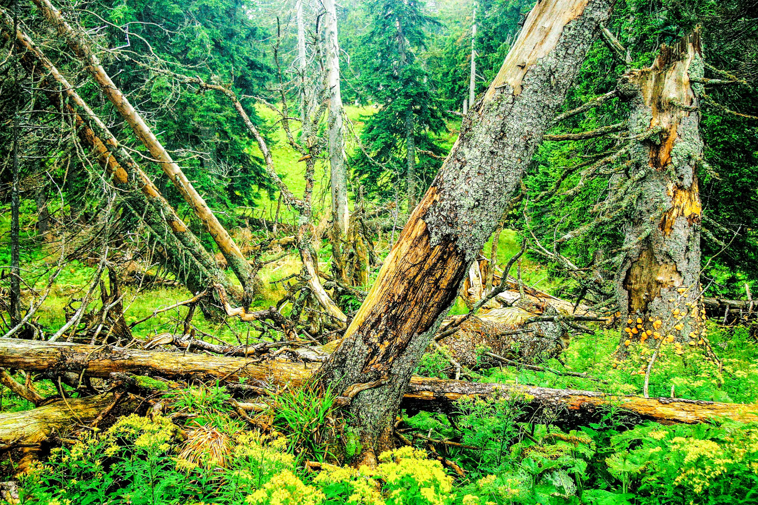 Why Leave No Trace is necessary in Wilderness