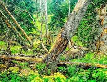 EWS - Kalkalpen Wilderness Press Photos -06398_