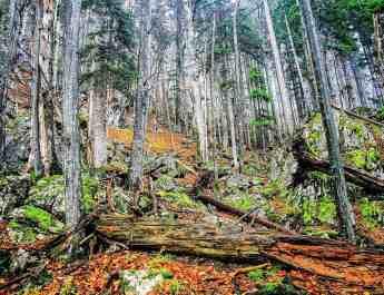 Zwielauf_korr.jpg - © European Wilderness Society CC BY-NC-ND 4.0
