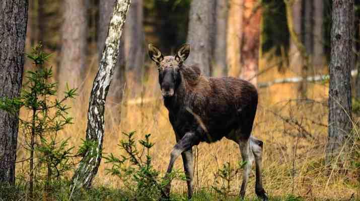 los_PŚ.JPG - European Wilderness Society - CC NonCommercial-NoDerivates 4.0 International