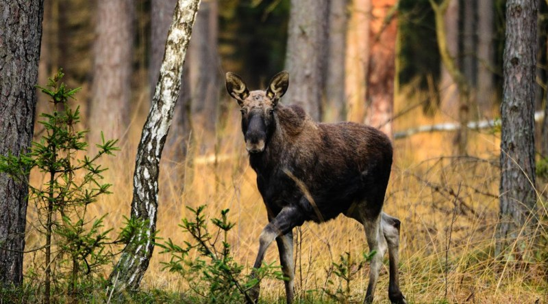 los_PŚ.JPG - © European Wilderness Society CC BY-NC-ND 4.0