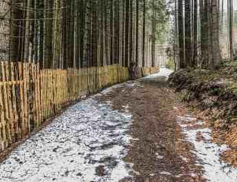 Bavarian National Park Sumava