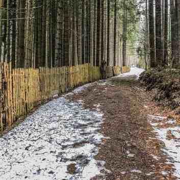 Bavarian National Park Sumava - 0569.jpg