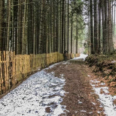 Bavarian National Park Sumava - 0569.jpg - © European Wilderness Society CC BY-NC-ND 4.0