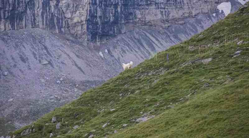 Herd Management Calanda Switzerland-15067.JPG - © European Wilderness Society CC BY-NC-ND 4.0